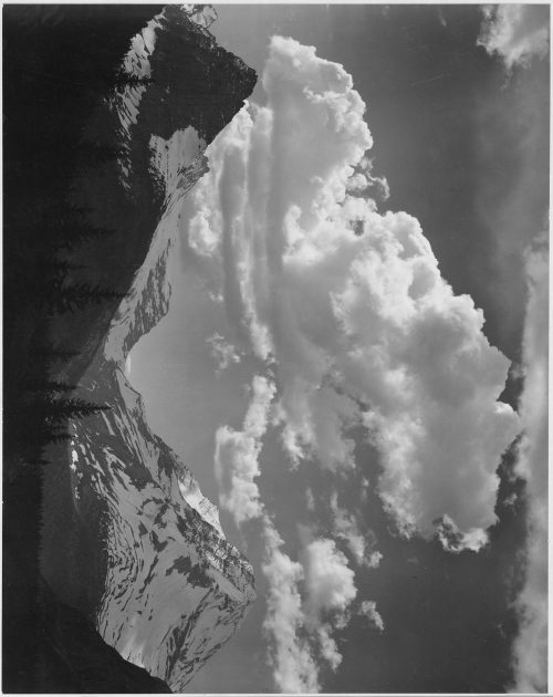 "Ansel Adams: Tops of pine trees, snow covered, ""In Glacier National Park,"" Montana"