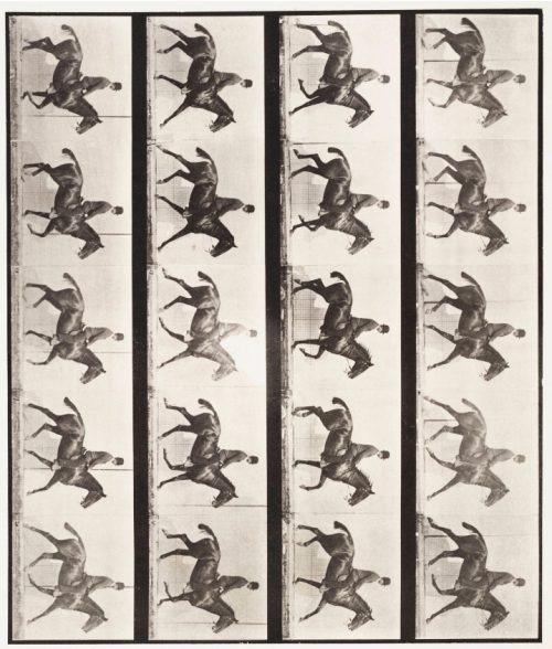Eadweard Muybridge: Daisy with Rider, 1887