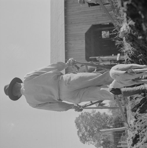 Gordon Parks: Daytona Beach, Florida. Bethune-Cookman College. An instructor on the agricultural school farm plowing early in the morning