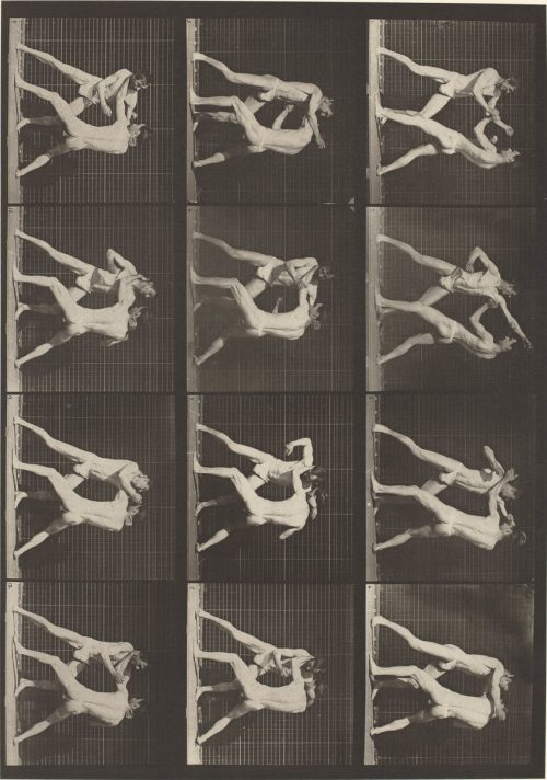 Eadweard Muybridge: Animal Locomotion, Plate 340, 1887