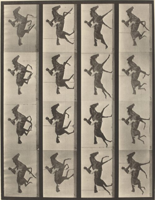 Eadweard Muybridge: Animal Locomotion, Plate 626, 1887