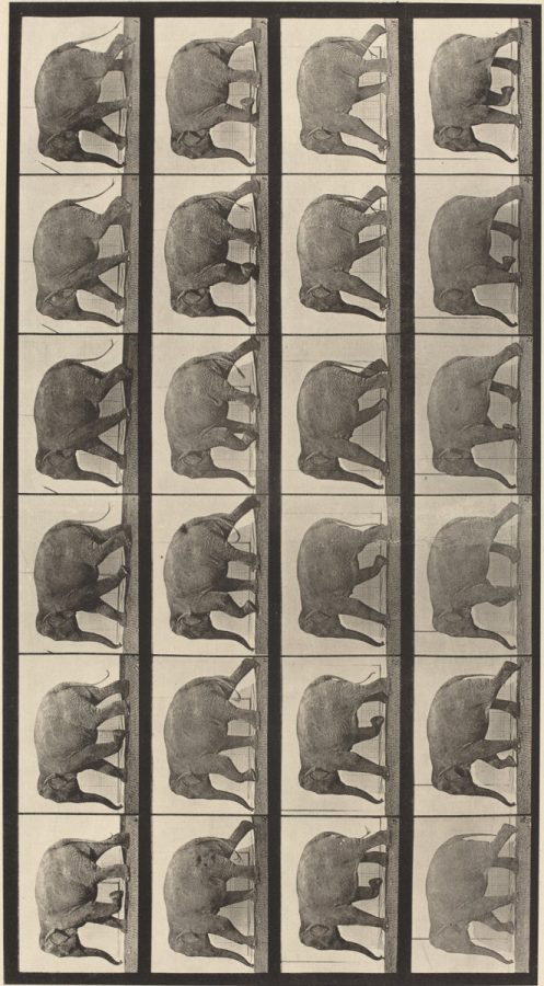 Eadweard Muybridge: Animal Locomotion, Plate 733, 1887