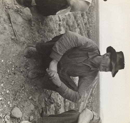 Dorothea Lange: Waiting for Work on Edge of the Pea Field, Holtville, Imperial Valley, California