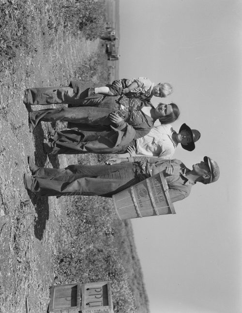 Dorothea Lange: Drought refugees from Oklahoma at work in the pea fields near Nipomo, California