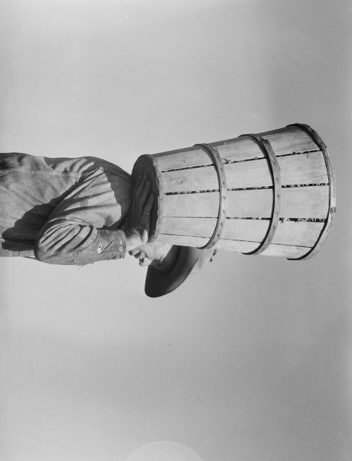 Dorothea Lange: Pea picker carrying a hamper of peas to the weighmaster. Nipomo, California; v1